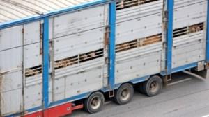 Kamer wil geen diertransport bij temperatuur boven de 30 graden