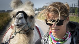Avonturier Tamar en haar kameel Einstein bereiken eindbestemming Sittard