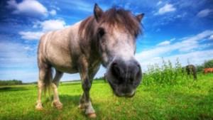 Ponykamp voor kinderen die thuis niet breed hebben