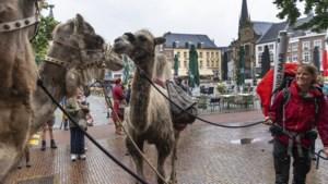 Avonturier voltooit wandeling met kameel, afscheid is er een met tranen