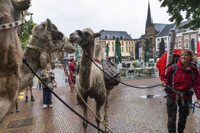 Avonturier voltooit wandeling met kameel, afscheid op de Markt in Sittard is er een met tranen