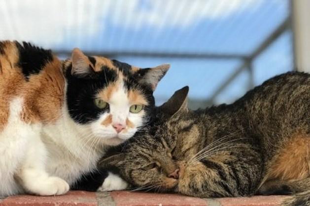 Dier van de week: Verlegen kattenpaartje Joepie en Prutske is als yin en yang