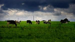 Minder koeien en varkens kan tienduizenden banen kosten