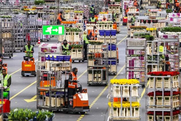 Nederlandse bloemensector exporteerde meer dan voor corona