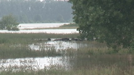 Lot van koeien die in het water stonden op de Stadsweide in Roermond onduidelijk