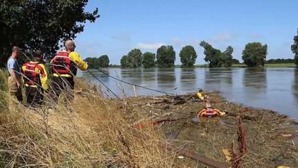 Video: Koe uit Echt belandt na overstroming 100 km verder in Brabant