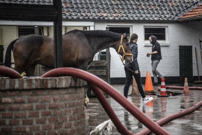 Stallen dreigen onder te lopen, manege in Geleen evacueert paarden