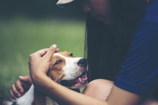 Dierenvoedselbank helpt door waterramp getroffen huisdieren met hulppakketten