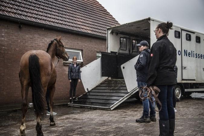 Paarden manege staan weer veilig op stal: 'Steun van de mensen is het belangrijkste dat er is'