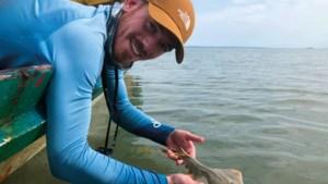 Guido uit Venlo is haaienexpert: 'Ik zwem liever met een witte haai, dan dat ik in een lift zit met een wesp'