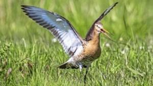 Een groenere gemeente? Gratis workshop Vogelbescherming