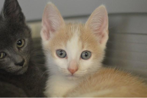 Dier van de week: speelse kittens Bob en Ben willen graag maatjes worden met hun nieuwe baasje