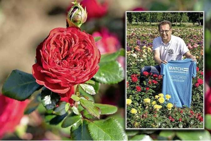 Kweker Patrick uit Wanssum is zijn donor dankbaar: roos vernoemd naar stamcelbank