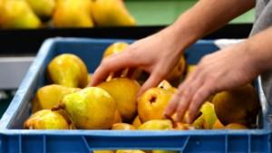 Fruittelers verwachten minder peren door koud voorjaar