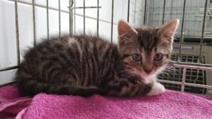 Dier van de week: jonge kittens op zoek naar aandacht en een nieuw thuis