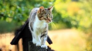 Rechter doet uitspraak: een kat mag in de tuin van de buren lopen
