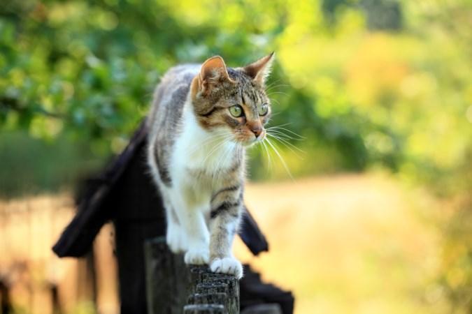 Een kat kan niet verboden worden in de tuin van de buren te lopen, vindt de rechter