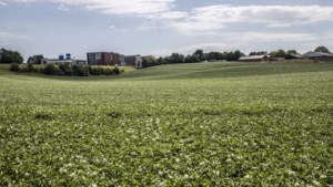 Stein zal 'alle juridische middelen inzetten' om zonneweide net buiten gemeentegrens te dwarsbomen
