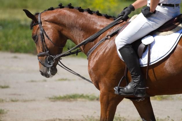 Limburgse kampioenschappen dressuur voor paarden en pony's in Reuver