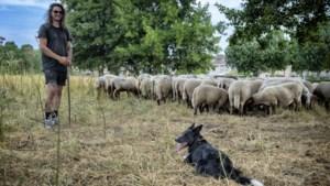 Elno Jongen maakte ommezwaai van laborant naar een bestaan als herder: 'Herderen is hard werken, maar je bent buiten én je bent vrij'