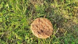 Bunde Alert waarschuwt hondeneigenaren voor mogelijk vergiftigde hamburgers