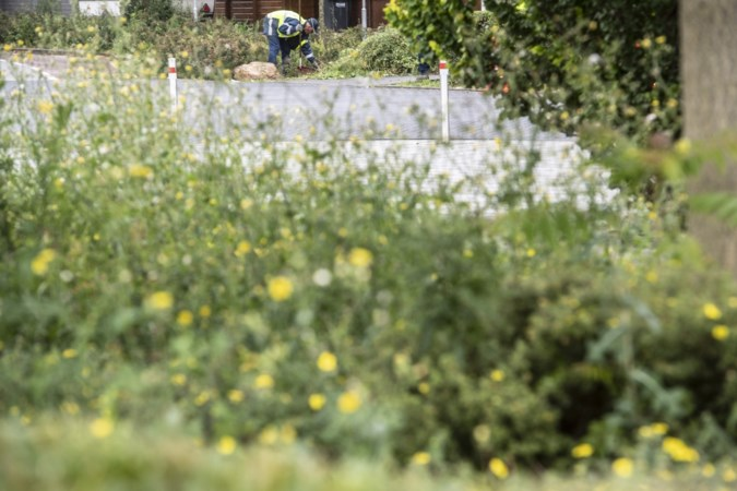 Gemengde reacties in Lindenheuvel over onkruid: 'Ze zeggen dat het hier toch maar een achterstandswijk is'