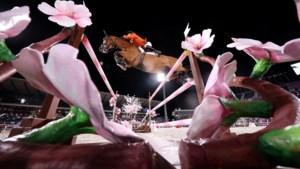 In Kerkrade zijn ze apetrots op Beauville Z, het paard waarmee Maikel van der Vleuten schittert in Tokio
