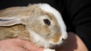 Dierenambulance Midden-Limburg vraagt hulp voor 25 gedumpte konijntjes