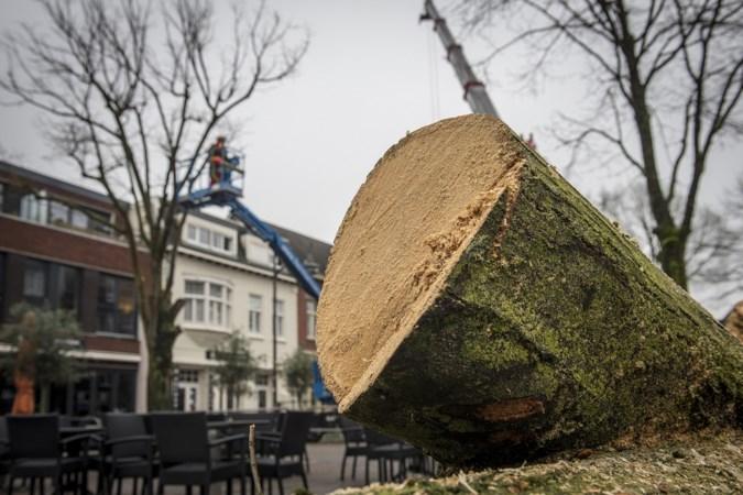 Beekdaelen kapt 'gevaarlijke' bomen aan de Beukenberg in Oirsbeek
