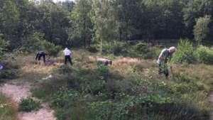 Vrijwilligers Stichting het Limburgs Landschap aan de slag op de Bremberg in Montfort