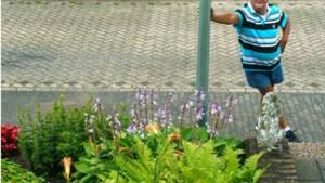 Eigen tuintje middenin de straat in Vaals: 'Ik krijg er energie van'