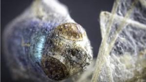 Zo heb je ze nog nooit gezien: popfotograaf uit Heerlen gaat van vastleggen popsterren naar haarscherpe details van beestjes