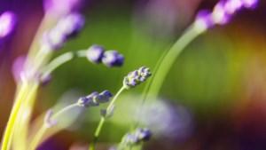 Toepasbaarheid van kruiden en ecologisch tuinieren centrale thema's tijdens open tuindag Epen