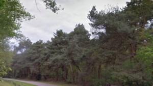 Aanleg van Natuurbegraafplaats Weerterland vertraagd door onderzoek en compensatiemaatregelen