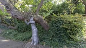 Duizenden bomen wachten op plek in monumentenlijst: 'Dat een boom al honderden jaren leeft, relativeert ons bestaan'