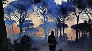Advies voor villabewoners aan brandende Côte: 'Gewoon de poort rammen!'