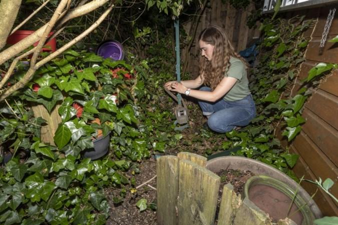 'Dieren vinden de weg naar groene tuin hartje centrum Weert'