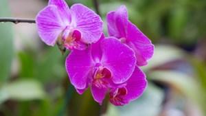 Buitenverkoop orchideeën en planten
