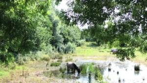 Een wandelrondje Doenrade langs bijenweides, Fatima, waterpaarden en prachtige holle wegen