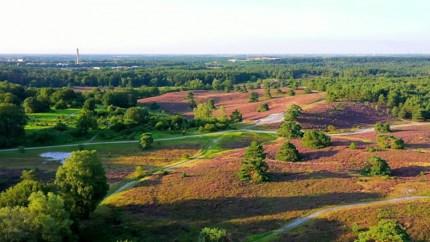 Prachtige dronebeelden: Natuur toont waardering voor natte zomer: Brunssummerheide bloeit als nooit tevoren