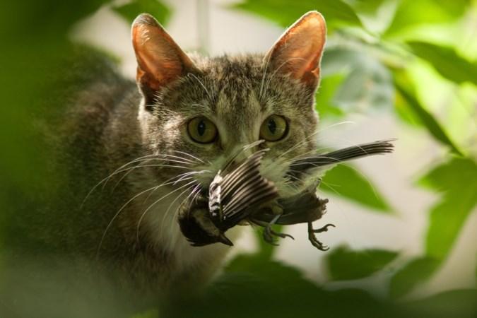 Hoon en bijval voor rechtszaak om katten uit de tuin van de buren te weren