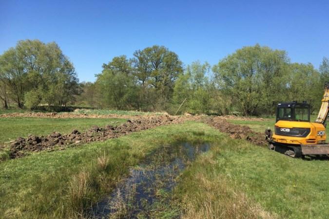 Eerste resultaten klimaatproject: Koekoeksbloem en moerassprinkhaan laten zich vaker zien in Geuldal