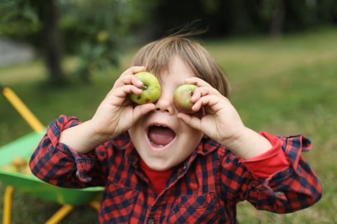 Kun je van appelpitten doodgaan en wat betekent het Apple-logo? Lees alles over ons favoriete fruit