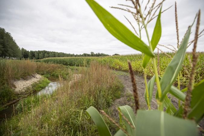 Kruidenrijk grasland en stukjes natuur kunnen in het Loobeekdal nog gewoon maïsvelden zijn