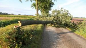 Vandalen zagen boom en straatnaambord om in Nederweert