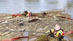 'Zwemmende' koe Leonarda genomineerd voor Dier van het Jaar