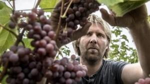 Limburgse wijnen scoren goed bij landelijke keuring