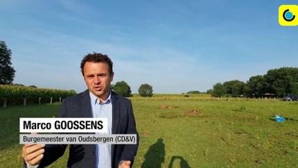 Wolf doodt twee knuffelpony's in Belgisch-Limburg: 'Ze maakten geen kans'