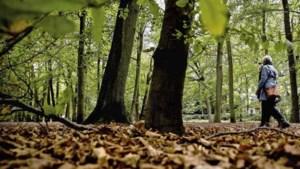 Rustig herfstweer deze week: vanaf donderdag dagenlang droog