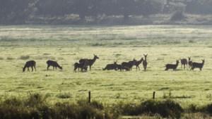 Provincie verstrekt weer subsidies voor nieuwe natuur uit pot van 200 miljoen